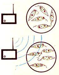 Как пахнет электромагнитное поле