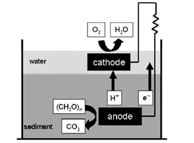 Электрическая энергия из растений - зеленые электростанции