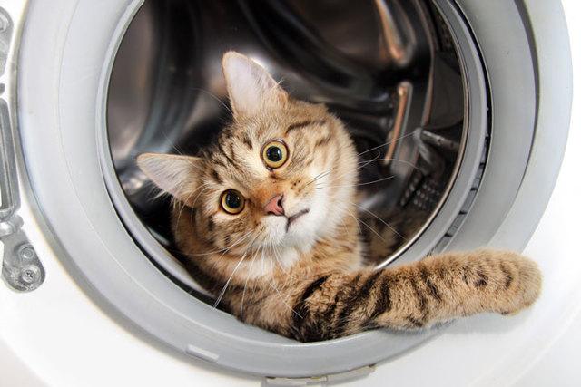 Что делать, если срабатывает УЗО или дифавтомат при подключении стиральной машины