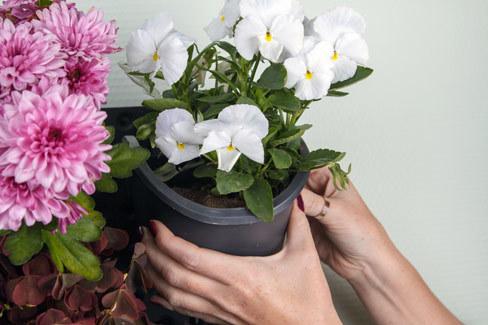 Фибероптика - чудо света в вашем саду